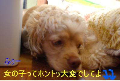 hekomimaro_convert_20100303160611.jpg