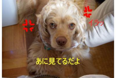 iramaro_convert_20100303160626.jpg