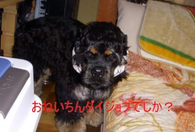 kowagowakuma_convert_20100303160639.jpg