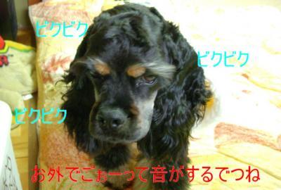kumakowa_convert_20100227085225.jpg