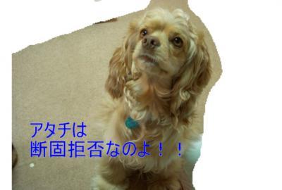 marokyohi_convert_20100130213228.jpg