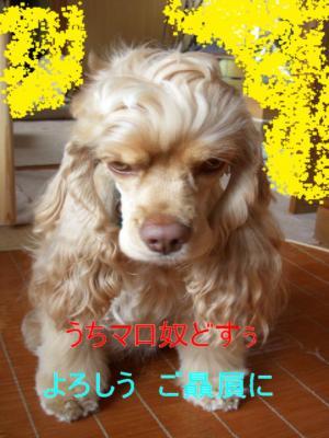 maroyakko_convert_20100307095818.jpg