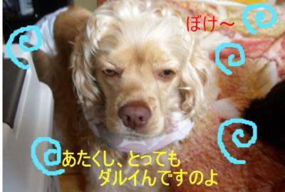 powapowa_convert_20100303160658.jpg