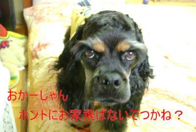 utakuma_convert_20100227093218.jpg