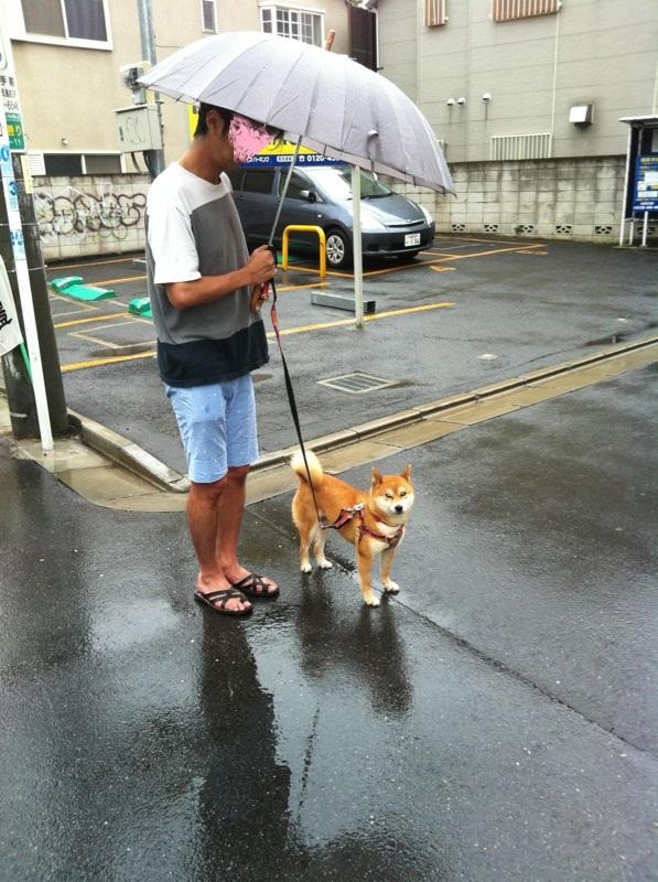 静香雨散歩