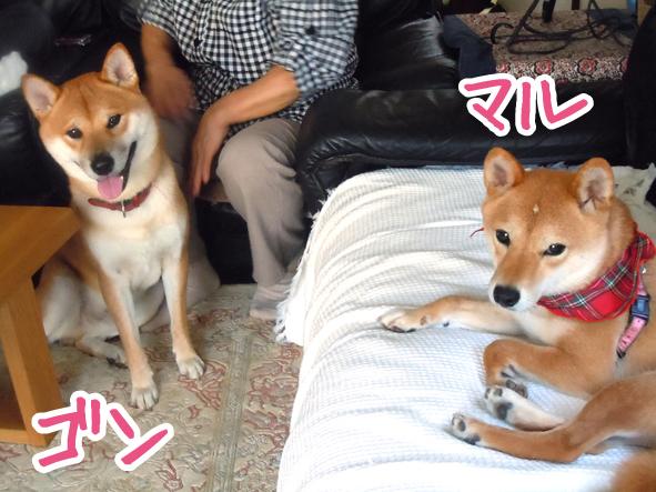 万瑠&ゴン
