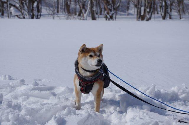 ぴょん雪の上