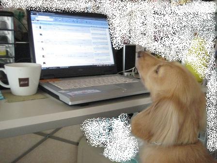 ①PC犬1