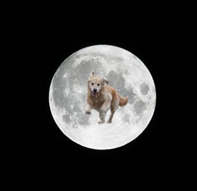 マックス月へ