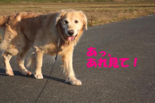 bu-39620001.jpg