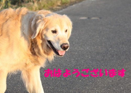bu-40420001_1.jpg