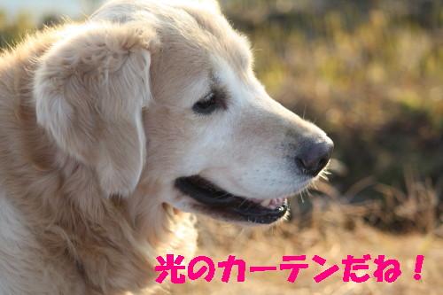 bu-40440001.jpg