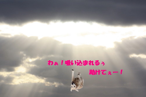 bu-40460001.jpg