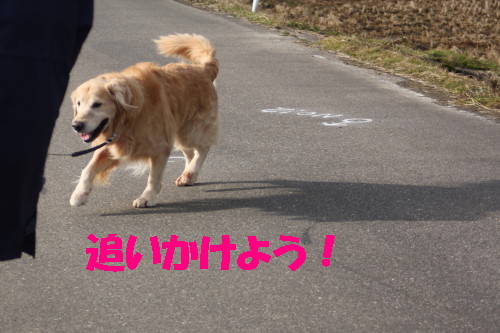bu-43320001.jpg