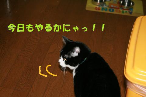 001_convert_20091127233052.jpg
