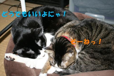 002_convert_20091217221946.jpg