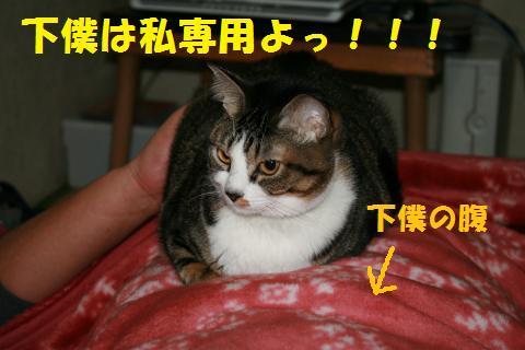 002_convert_20100117215855.jpg