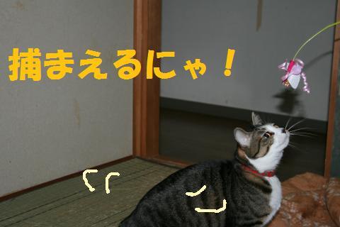 004_convert_20091214233809.jpg
