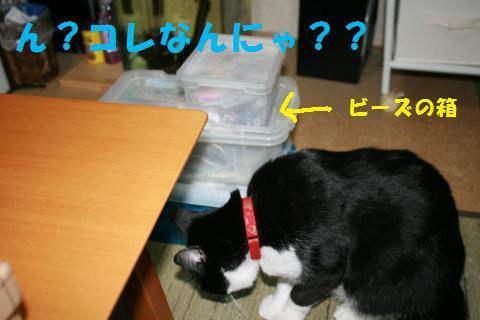 005_convert_20091210235753.jpg