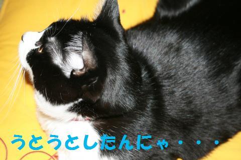005_convert_20091226004049.jpg