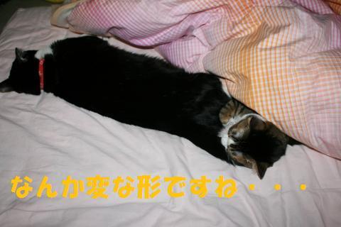 007_convert_20100101222319.jpg