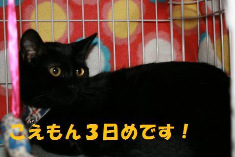 007_convert_20100112222242.jpg