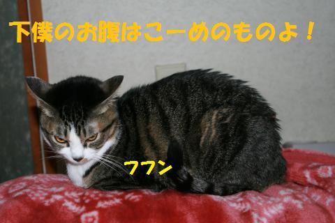 007_convert_20100117220031.jpg