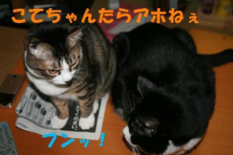 008_convert_20091105225228.jpg