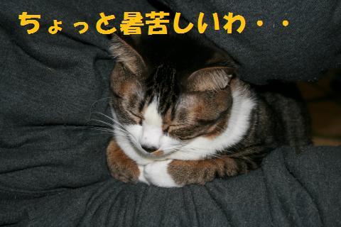 010_convert_20100103225206.jpg