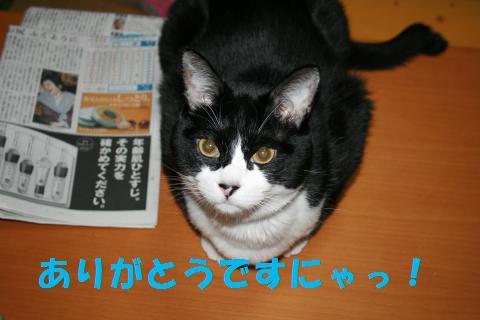013_convert_20091105225346.jpg