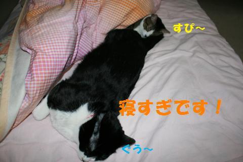 015_convert_20100101222455.jpg