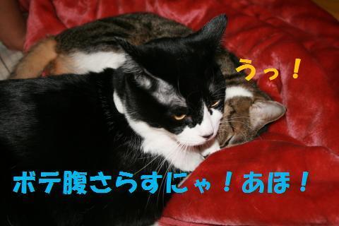 023_convert_20091219231936.jpg
