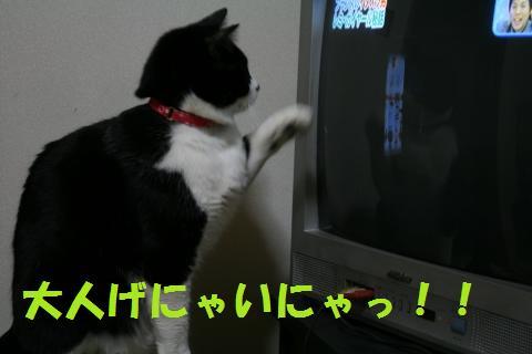 025_convert_20100108213005.jpg