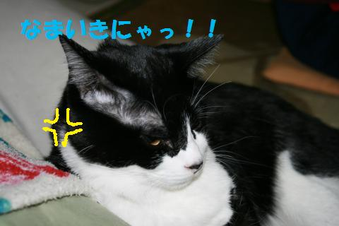 030_convert_20091130230013.jpg