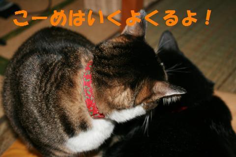 034_convert_20091217222406.jpg