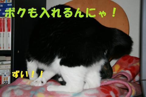 037_convert_20100103225511.jpg