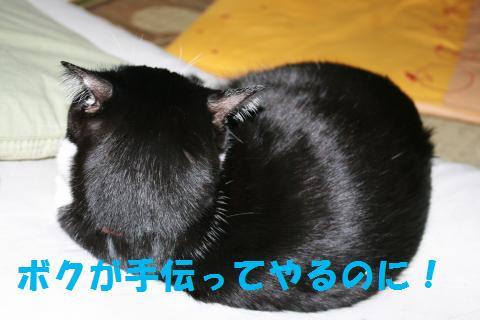 040_convert_20091210235921.jpg