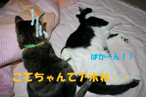 047_convert_20100101223220.jpg