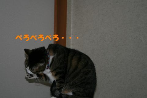 048_convert_20091126222310.jpg