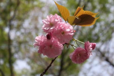 0417-5鶴見緑地