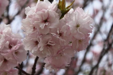 0417-13鶴見緑地