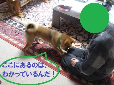 DSCF0207.jpg
