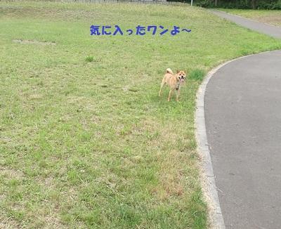 DSCF2432.jpg