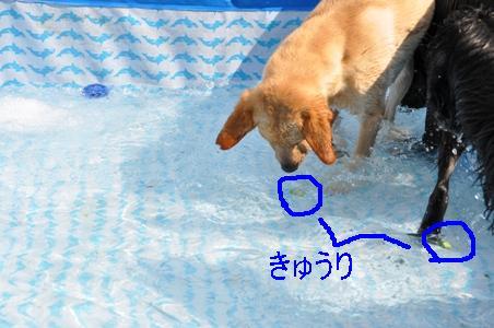 DSC_0047_20110711104247.jpg