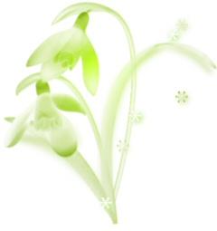 snowdrop02s.jpg