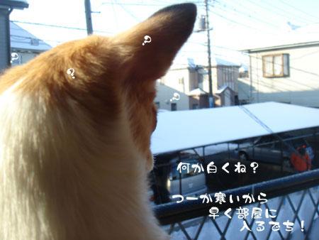 DSC0017320100202.jpg