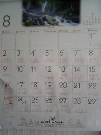 カレンダー8月V6012811