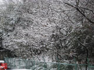 2011-2-11-1.jpg