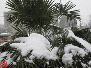 2011-2-11.jpg