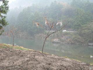 200911032d.jpg